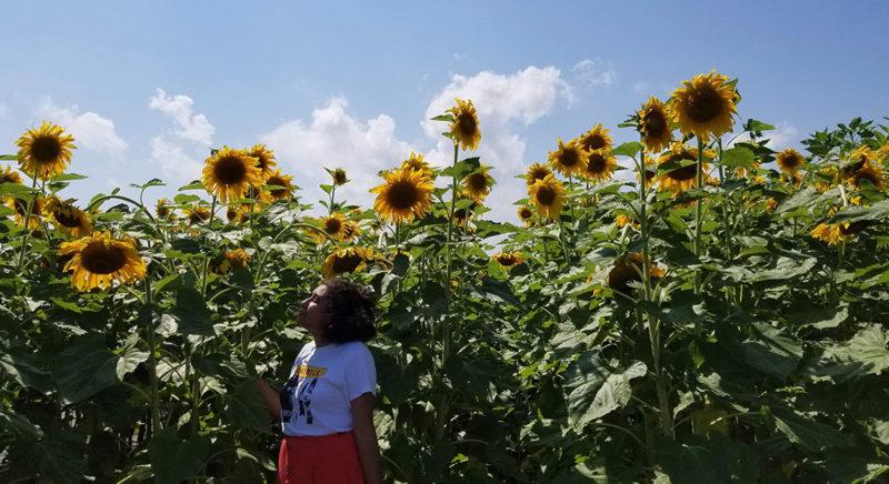 Sunflower Summit